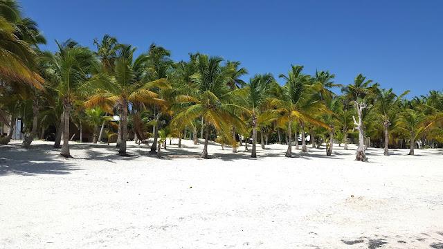 dzikie plaże, gaje palmowe