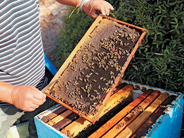 Πάρτε μέλι κατευθείαν από μελισσοκόμους και όχι από το σουπερ μαρκετ. 5 μυστικά που ξεσκεπάζουν...