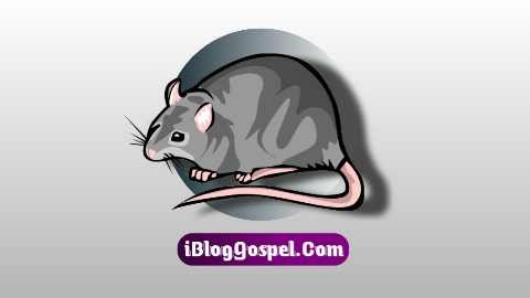 Biblical Meaning of Rats In Dreams