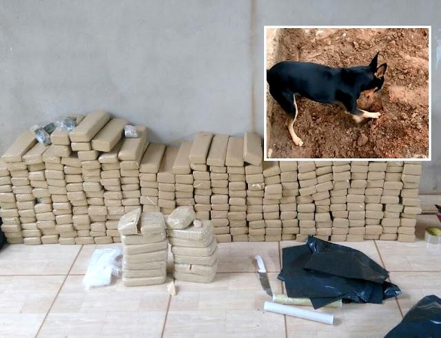 Assista o vídeo: Pinscher de traficante mostra para agentes da PF onde droga estava enterrada