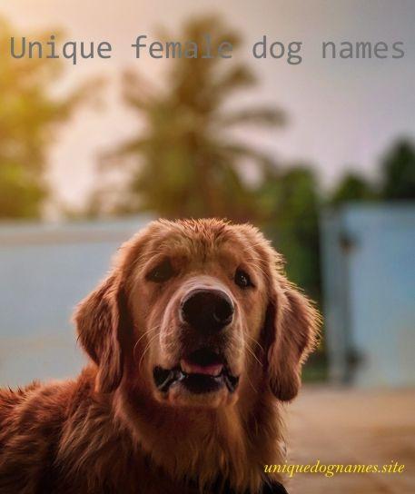 Unique Female Dog Names,female dog names