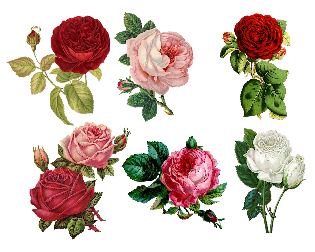 5 Flowers That Will Help You to Refresh Your Friendship