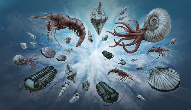 A new normal: Study explains universal pattern in fossil record