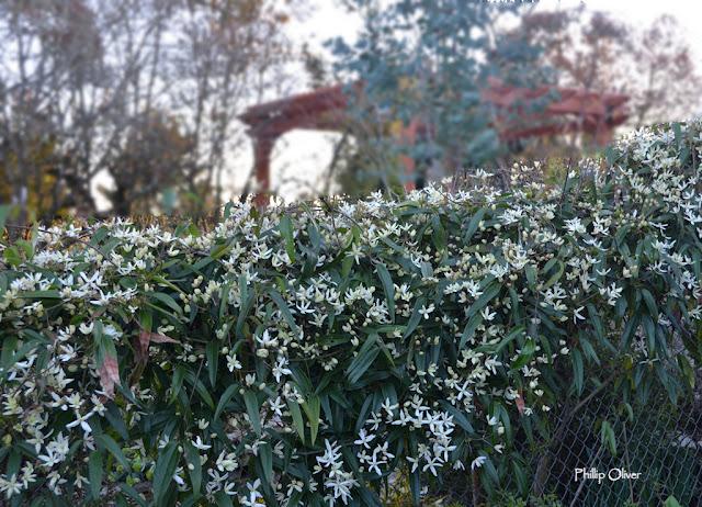 Garden Blogger S Bloom Day March 2020