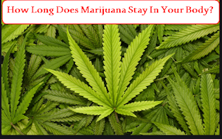 How Long Does Marijuana Stay In Your Body?