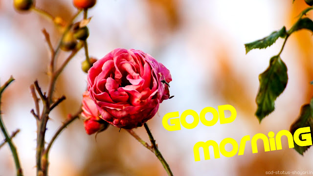 Good morning image roses
