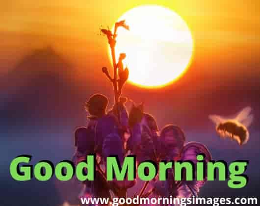 Good morning shayari for facebook