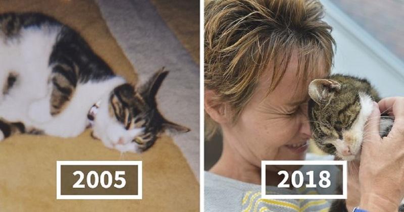 Γάτα επέστρεψε στο σπίτι της μετά από 13 χρόνια (βίντεο)