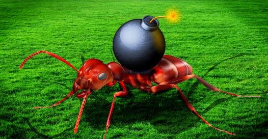 Formiga explosiva que é uma verdadeira bomba!