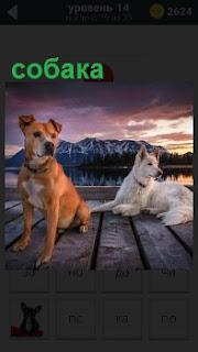 Две собаки сидят на причале около воды, одна из которых лежит на фоне водоема и гор вдали