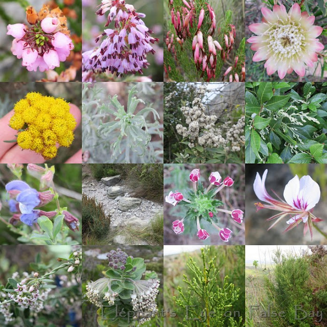 May flowers around Silvermine waterfall