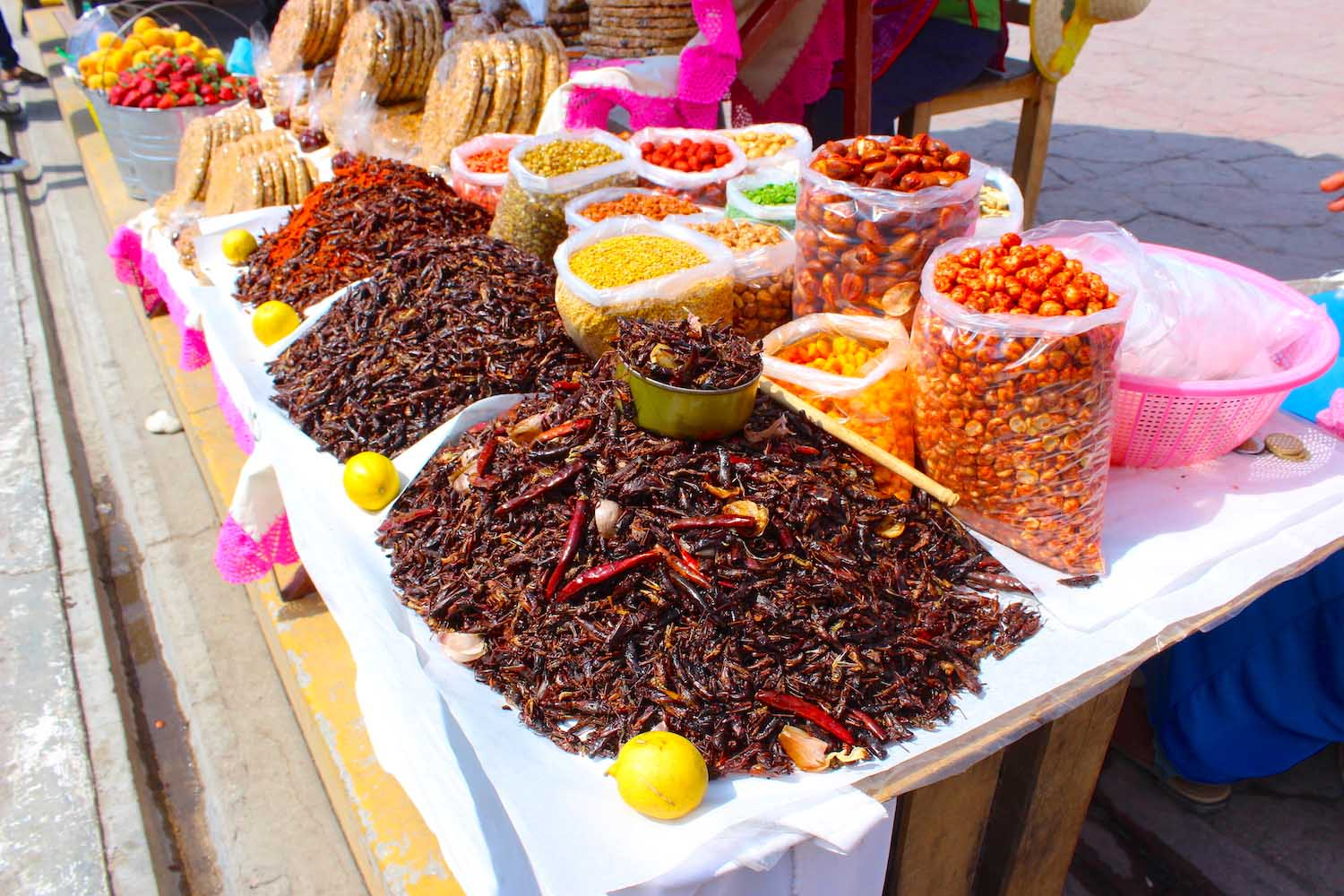 grasshoppers in cholula