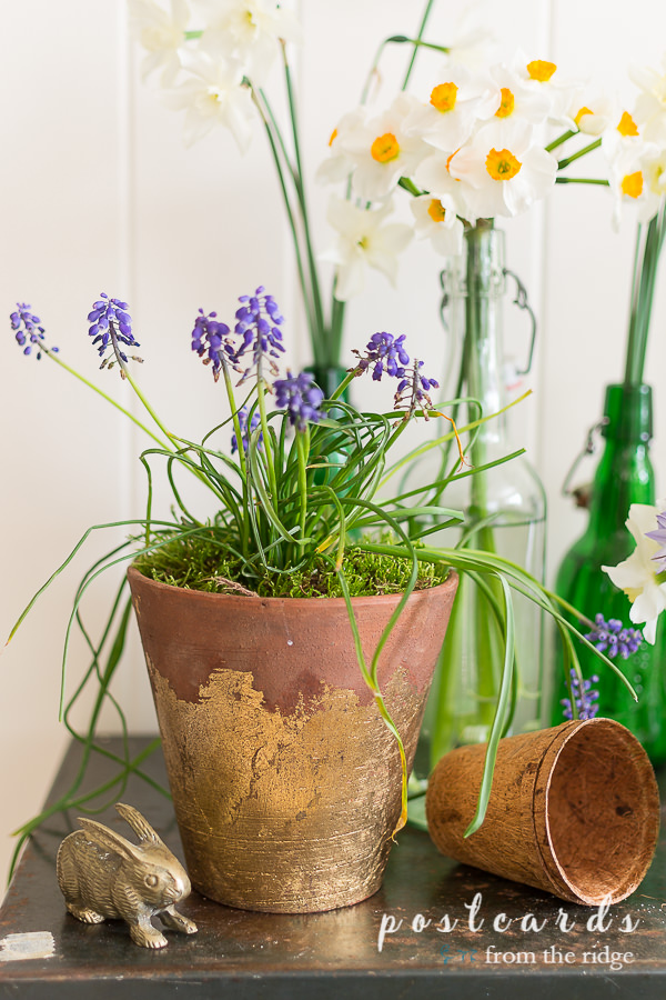terra cotta planter with gold leaf full of grape hyacinths