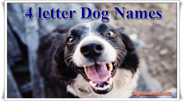 4 Letter dog names