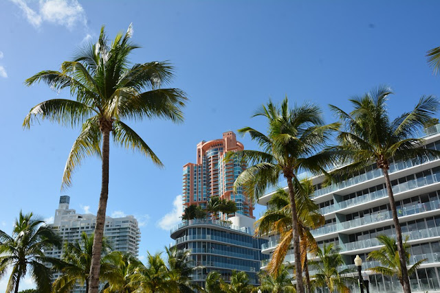 Miami Beach palm trees