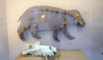 Η γένεση της Κύπρου πριν την εμφάνιση του ανθρώπου: Ελέφαντες και Ιπποπόταμοι στην Αγία Νάπα