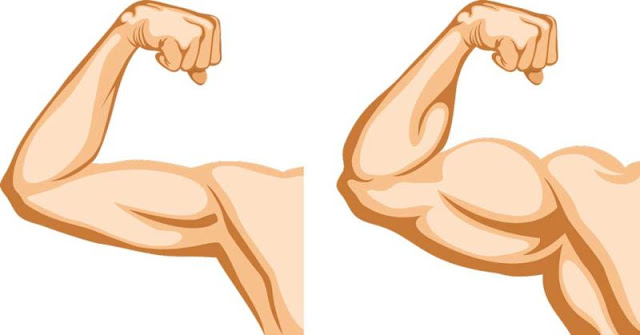 Building Muscle - How to Build Up Your Biceps In a Short Period of Time