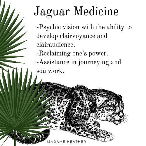 Jaguar spirit animal