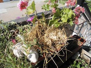 pacciamatura orto biodegradabile fai da te