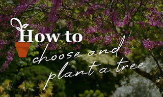 How to choose trees