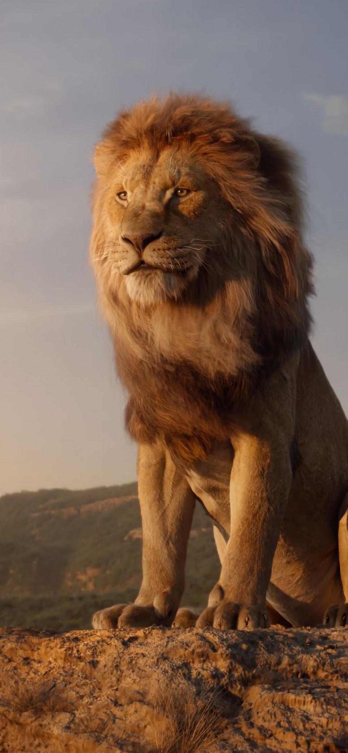 The Lion King 2019 Mufasa Simba 4k Wallpaper 18