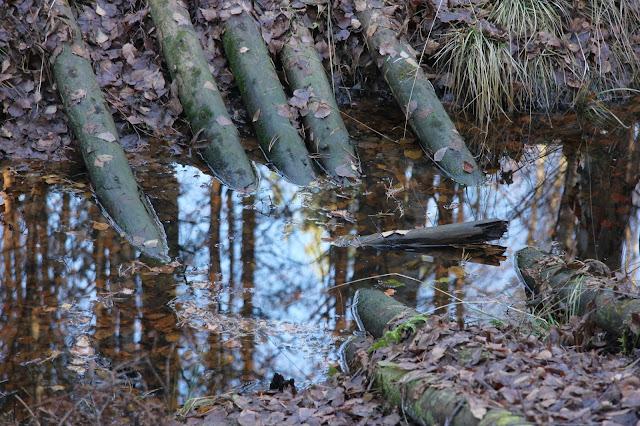 Старый мостик в лесу