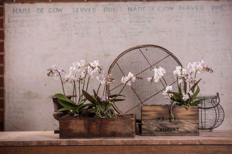orquídea blanca en caja de madera