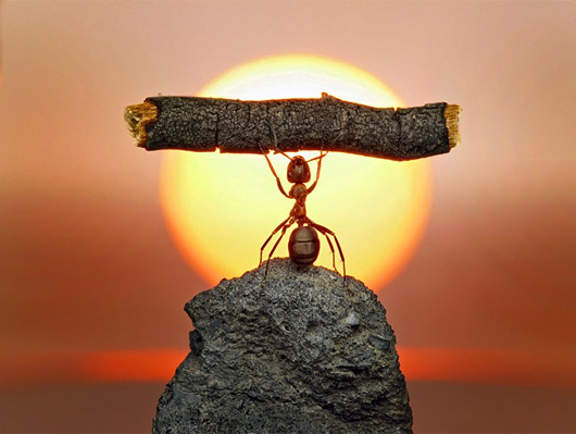 Russian photographer Andrey Pavlov takes the most mind-blowing macro photographs of ants that you will ever see....weight training!