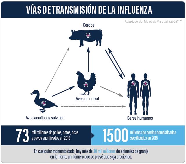 Virus Zooníticos | Cómo Evitar La Próxima Pandemia