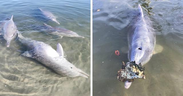Дельфин так соскучился по людям, что когда те вернулись, начал носить подарки со дна океана