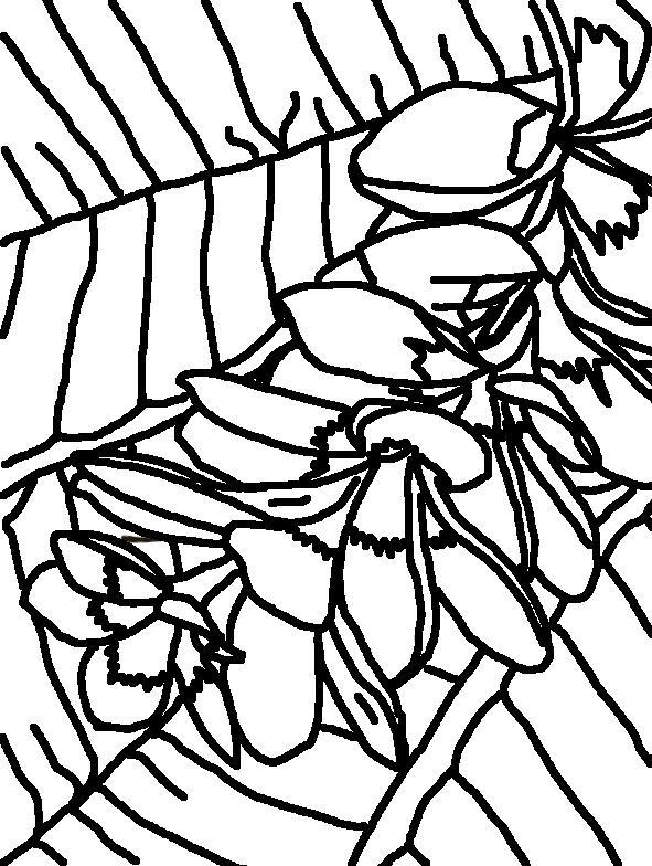 Coloring Page World: Frangipani Flowers (Portrait)