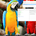 Galaxy S20 5G SC-51A Remove FRP - Gmail