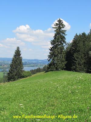 Blick auf den Niedersonthofener See