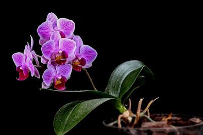 Mengapa ada tumbuhan endemik di wilayah tertentu