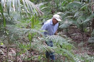 AGROFLORESTAR e projetos patrocinados pela Petrobras  plantarão cerca de 4.500 mudas de espécies ameaçadas  em todo o Brasil