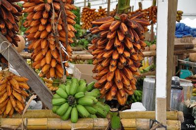 pisang, pisang tongka langit, pisang songgobumi, tongka langit