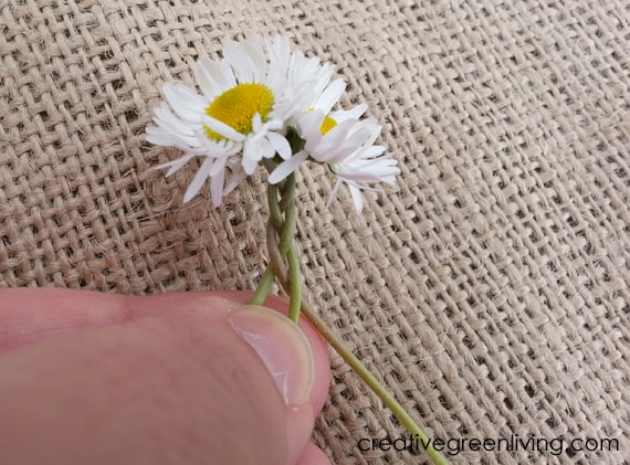 easy DIY Daisy Chain Flower Crown #creativegreenliving