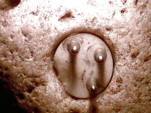Phát hiện thanh đinh ốc nằm trong khối đá triệu năm tuổi: Sản vật cao cấp thời tiền sử?