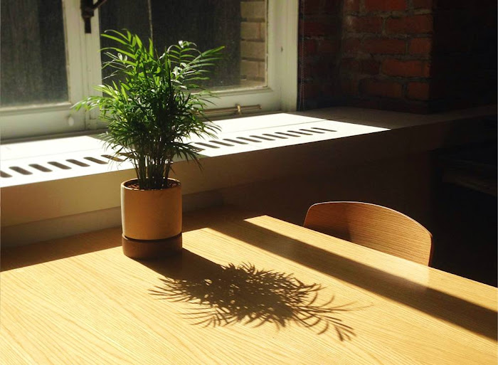 NAMC montessori natural light desk plant reducing the carbon footprint of your classroom
