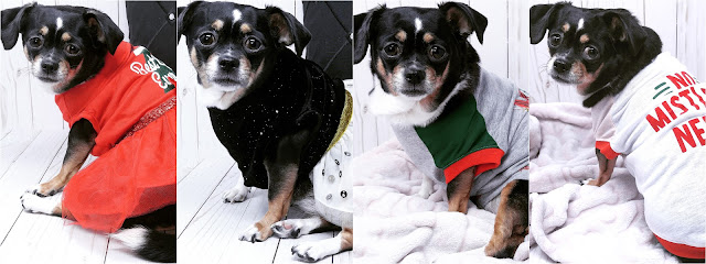 PetSmart Haul | Sophia Fashion Model: Winter & Holiday Edition