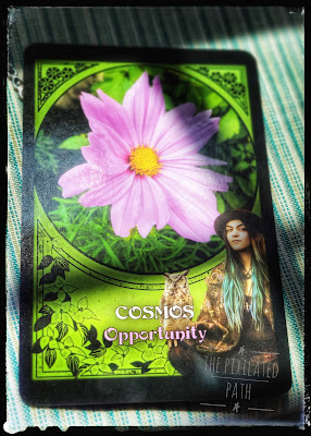 Cosmos Card from Flower Magic Oracle Deck