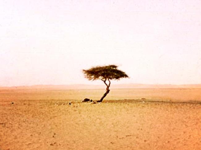 La soledad de un árbol-libro