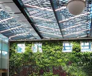 Muros verdes | ¿Que son? Ventajas y Beneficios 🥇