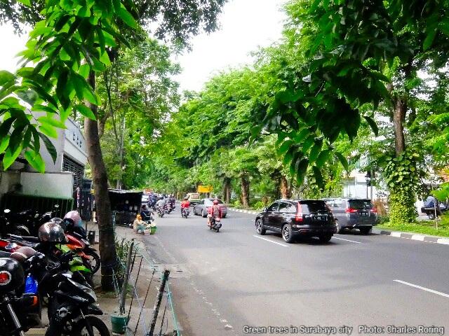 Trees along the roadsides of Surabaya