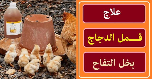 """""""علاج قمل الدجاج"""" """"علاج قمل الدجاج بالخل"""" """"علاج قمل الدجاج طبيعيا"""" """"علاج قمل الدجاج بالاعشاب"""" """"علاج قمل الدجاج البلدي"""" """"علاج قمل دجاج"""" """"علاج قمل الطيور"""" """"علاج قمل الفراخ"""" """"علاج القمل عند الفراخ"""" """"ما هو علاج قمل الدجاج"""" """"علاج حشرات الدجاج"""" """"علاج القمل الدجاج"""" """"علاج حشرات الفراخ"""" """"التخلص من قمل الدجاج"""""""