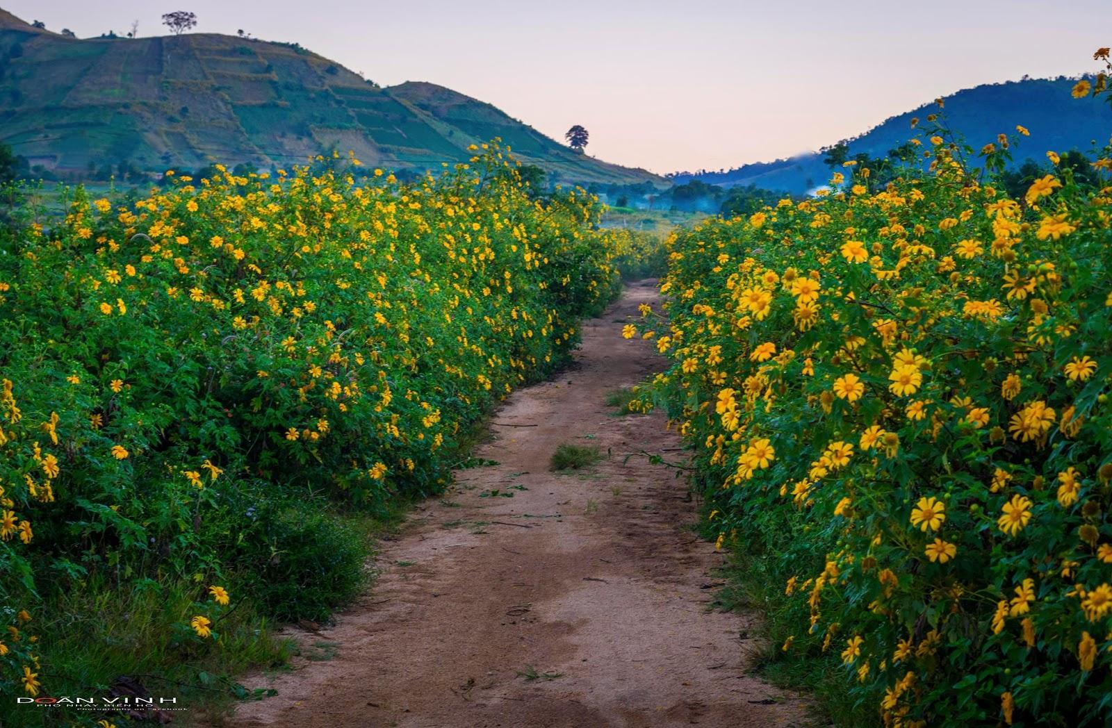Lễ hội hoa Dã Quỳ - Chư Đăng Ya sẽ THÀNH CÔNG hay THẤT BẠI?