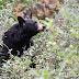 American black bear<br /> - アメリカグマとの遭遇 -