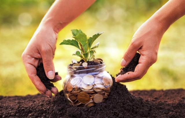 Перспективные инвестиции: вложение средств в земельные участки