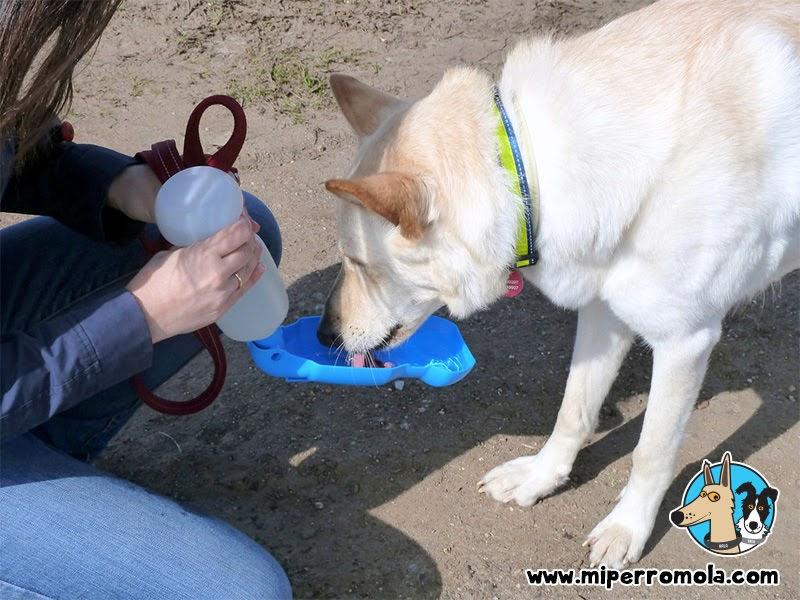 Can de Palleiro bebiendo agua