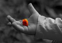 «Il Signore è lo Spirito e dove c'è lo Spirito del Signore c'è libertà. E noi tutti, a viso scoperto, riflettendo come un in uno specchio la gloria del Signore, veniamo trasformati in quella medesima immagine, di gloria in gloria, secondo l'azione dello Spirito del Signore» (2Cor 3,17-18)